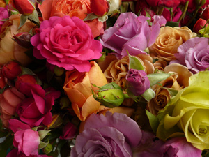 Wagners Roses